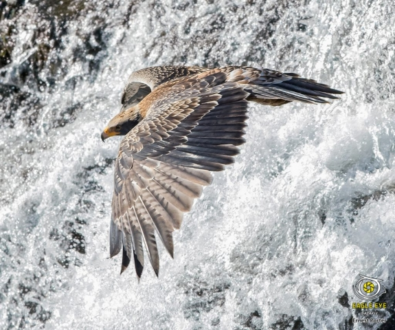 Kendi over the waterfall (Verreaux's Eagle)